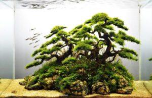 Дерево бансай из коряг и яванского мха