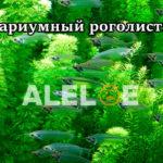 Аквариумный роголистник — содержание в аквариуме