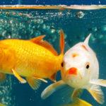 Рыбки для начинающих: ТОП 10