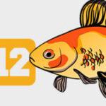 12 фактов о золотых рыбках: инфографика