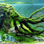 Акваскейп — стиль оформления аквариума