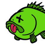 Почему умерла аквариумная рыбка? Топ 5 причин.